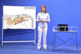 Praxisorientierte Anatomie und Physiologie bei Hund, Katze und Pferd Teil 4