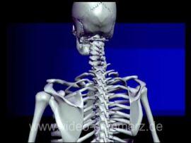 Crash Kurs Medizin: Bewegungsapparat