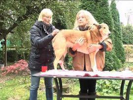 Alternative Heilmethoden bei Hund und Pferd - Blutegelbehandlung und Druckpunktmassage