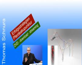 Erfolgsstrategien in der Pferdeakupunktur