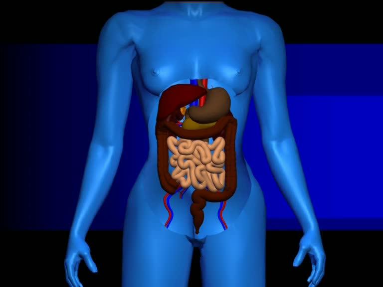 medizin magen darm