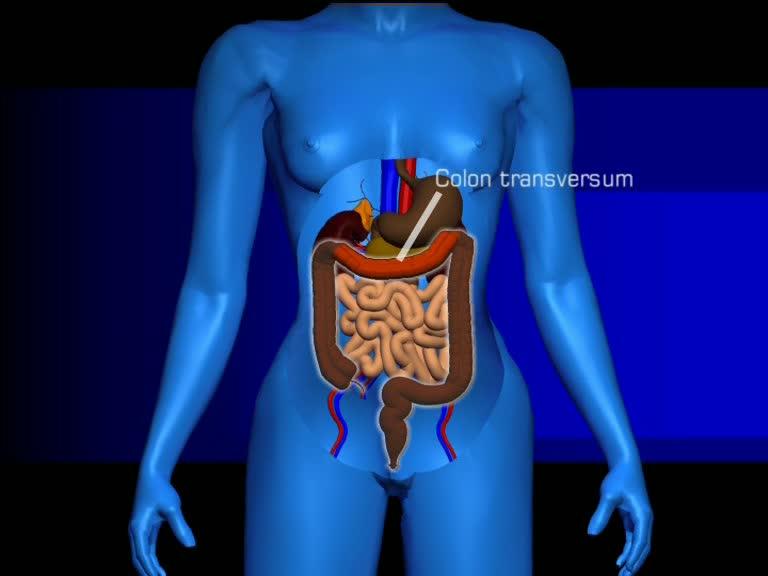Hinter dem Magen- Darm- und Leberkonvolut befinden sich die Nieren.