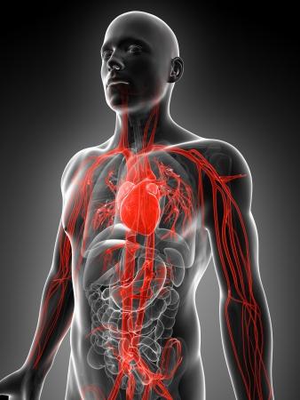 Die Arteria mesenterica inferio versorgt die unteren Abschnitte des ...