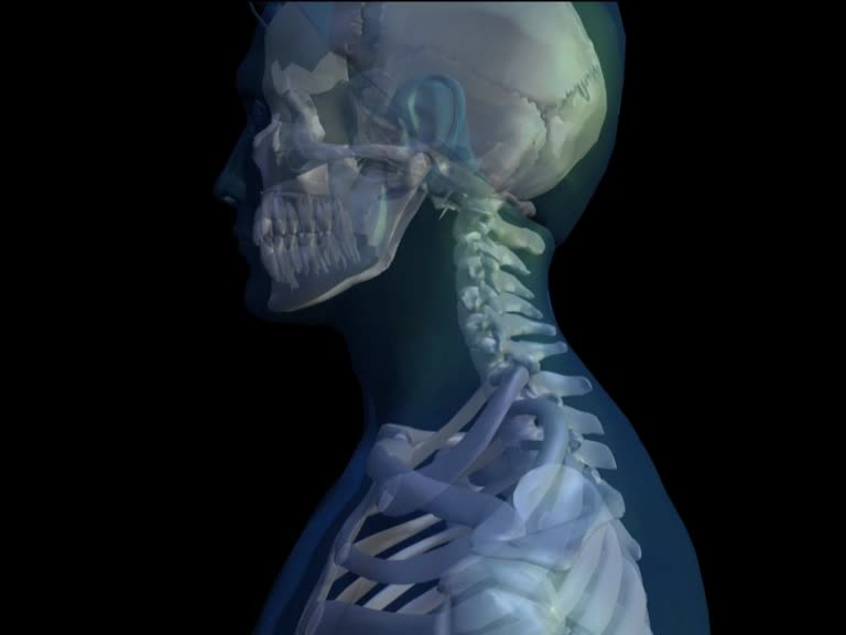 Neuraltherapie-Skelett-Halswirbelsaeule